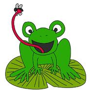 frog_fly