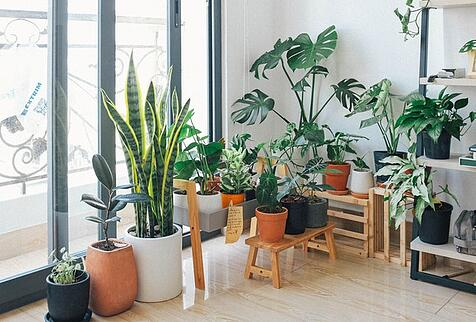 plants by a window to describe cultural adaptation like repotting a plant