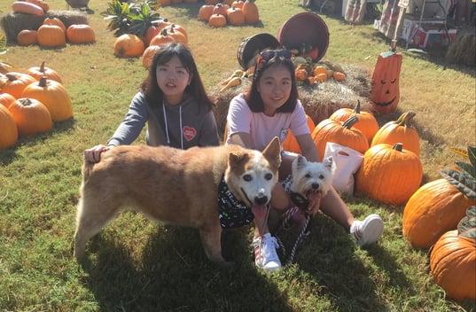 two asian teenage girls in pumpkin patch