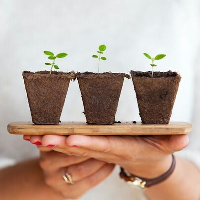 two hands holding wooden board with three ecological plant pots
